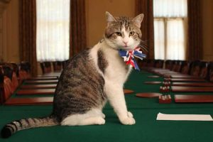 Larry will remain as Chief Mouser at No. 10