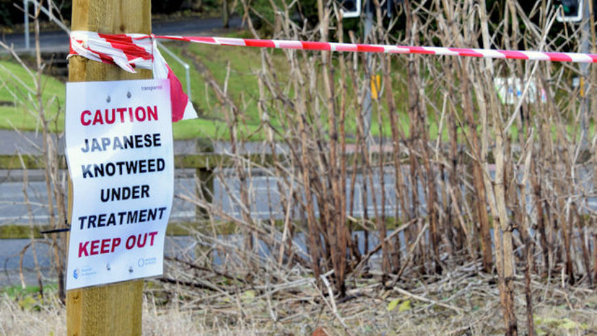 New tool for assessing knotweed risk hits market
